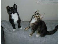 3 Kittens Ready to be Re-homed