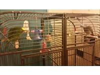 XL double parrot cage macaw amazon cockatoo grey