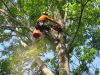 Tree Surgeons. Cutting down Dangerous trees. Good prices.