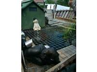 Fish and pond for sale