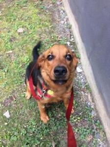 """Young Male Dog - Mixed Breed: """"Turbo"""""""