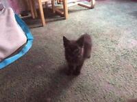 Kittens of sale