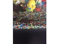 Pleco sucker fish