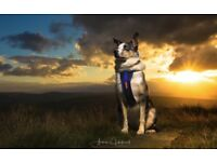 Dog Photographer based in Cheshire (able to travel)