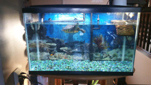 29 Gallon  fish tank and turtle