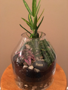 Beautiful Terrarium For Sale with Tropical Plants, only $49.95