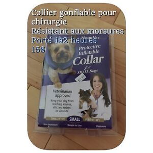 Articles  Chien chat