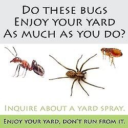 Bedbugs Mice Rat wasps Ants Flies Extermination Removal pest control in london