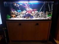 4ft fluval fish tank complete set up Inc fish