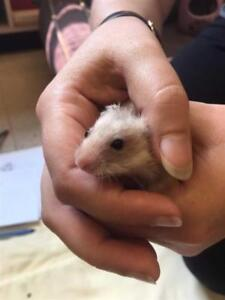 "Baby Male Small & Furry - Hamster: ""Sprinkles"""
