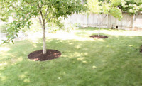 Mulch Ring for Trees