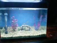 Tropical fish tank 30litres