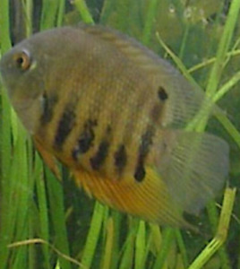 2 Green Severum  location is Oromocto