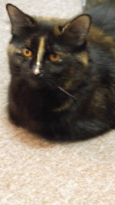 Beautiful Buffy looking for mature person