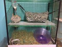 chinchilla with cage and supplies