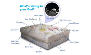Pets stains removal. Mattress Cleaning.