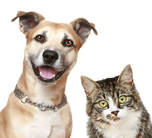 Professional, Reliable Pet Sitting & Dog Walking - Kings County