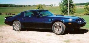 1981 Trans Am Project Car