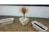 3 Garden planters with plants