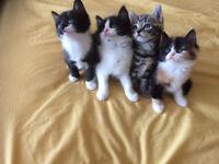 5 Beautiful energetic kittens