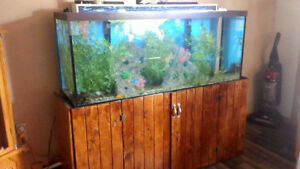 120 Gallon Aquarium with Lid, Custom Light, Filter, and Plants -