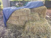 Straw bales. Wedding, party. BBQ. Horses?