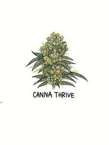 Medical Cannabis Prescription Service