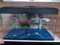 Fish R Fun 54 litre aquarium Fish Tank