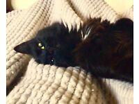 LOST BLACK CAT, E16