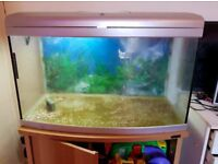 3FT bowed front fish tank