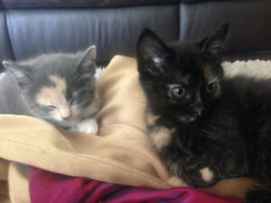 Sweet kittens for sale