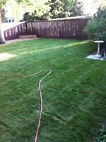 NEED SOD INSTALLED RIGHT NOW?