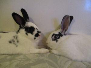 Rabbits!!