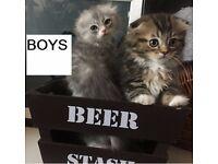 Very Rare Kittens