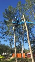 Tree pruning, tree removal, stump grinding affordable prices!