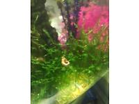 Aquarium snails 🐌