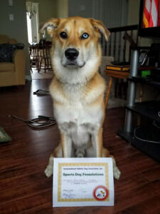 Responsible Couple Seeking Dog-friendly Rental For Sept 1st