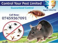 Pest control Mice Bedbugs Cockroaches Ants Wasps Extermination 100% Same day