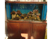5FT CUSTOM BUILT 560 LITRE FISH TANK & CABINET & SUMP FOR MARINE OR TROPICAL - DELIVERY 07544000786