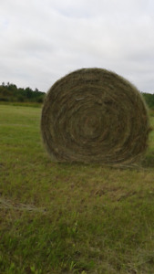 2017 Tame grass and grass hay round bales