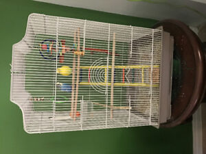 Budgies including cage