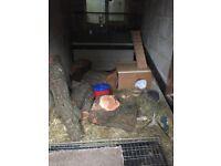 2 Rabbits, Sid (mini lop) & April (dwarf mixed)