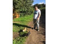 Louisa's and Tom's Dog Walking/Sitting Service