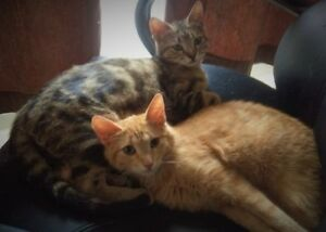 """""""Valerie"""" & """"Haleigh"""" sweet girls available(spayed & vaccinated)"""