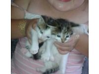 Kittens x6