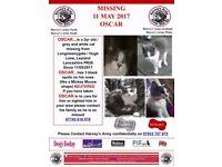Missing Cat Leyland