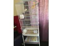 Red Factor canaries (pair) + Tall White double cage.
