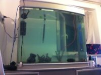 Large fish tank for swap or sale