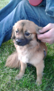 Family Ever much is Truly  missing there little Danver LOST DOG