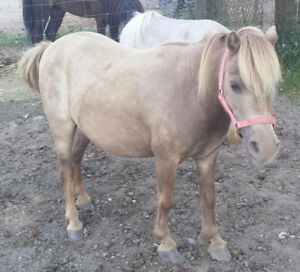 Mini mare with papers